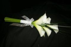 Stylish calla lilies